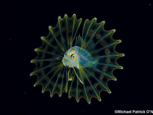 0301-JCNW-CALENDAR-Fish-1-.jpg