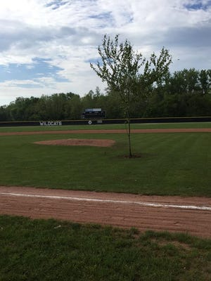 A tree was planted between the pitcher's mound and home plate in Ohio.