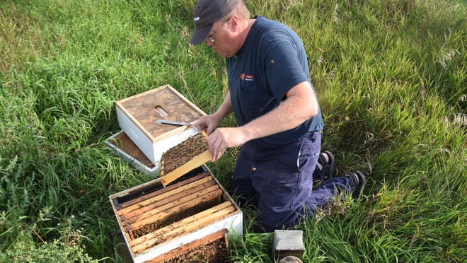 Dave Jastram inspects one of beehives on Jay Nebben's farmland north of Dell Rapids. For Jastram, beekeeping is a hobby that's turned into a part-time profession.