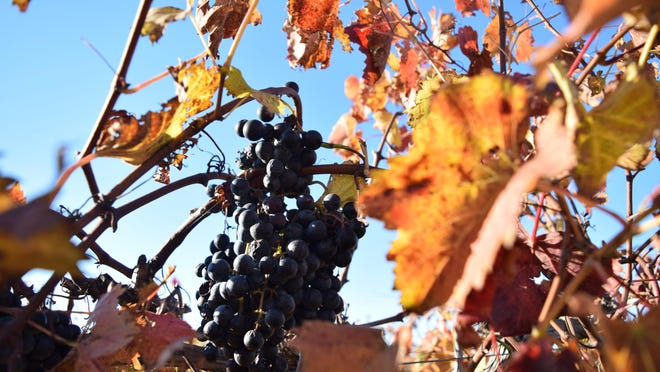 This fall, Layton's Chance Vineyard & Winery hopes to offer two new twists on its time-tested grapes.