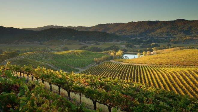 St. Supéry winery's 1,500-acre Dollarhide Ranch lies on Howell Mountain in the Napa Valley. The geographically, biologically and climatically diverse property produces red and white Bordeaux varietals.