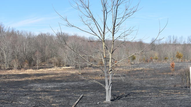 A tree stands on Monday amid scorched earth after a brush fire swept through about five acres Sunday on East Kaisertown Road in Montgomery.