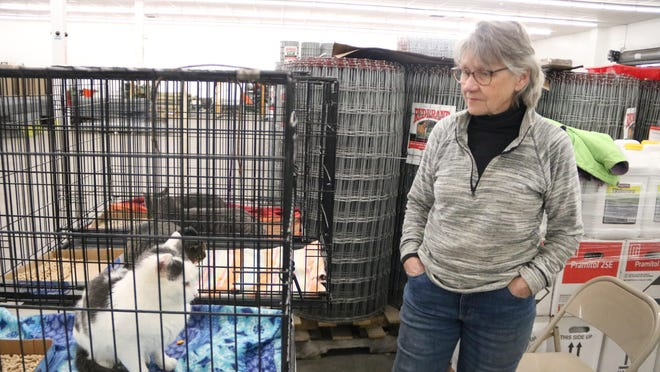 Jill  Wojtaszek takes cats and kittens to Tractor Supply in Milford to be adopted every Saturday, noon to 3 p.m., and Milford Pet Supply Plus on the first Sunday of the month.