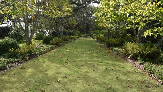 This path is lined with deciduous magnolias with boxwoods and ferns under the canopy of the trees.