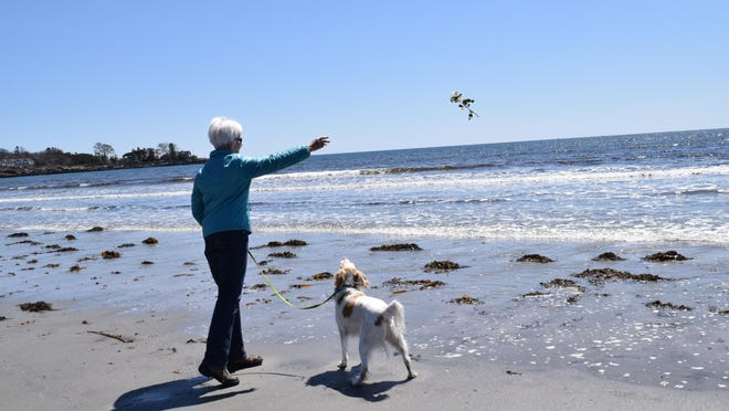 Ellen Flavin of Kennebunk tosses a yellow rose into the surf in honor of Barbara Bush at Gooch's Beach in 2018 as her brittany spaniel, Rosie, looks on.