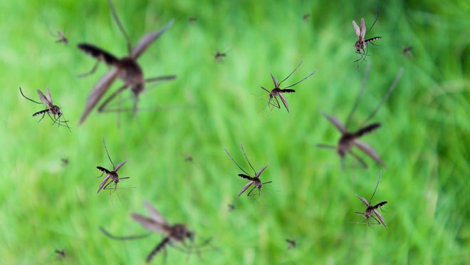 Check out Mary Hunt's remedies for decreasing mosquitoes in your back yard.