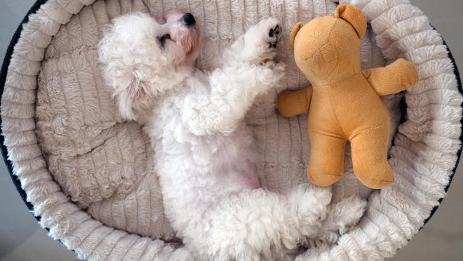 Periodically photographing your puppy next to the same stuffed toy can help determine how much your pet is growing.