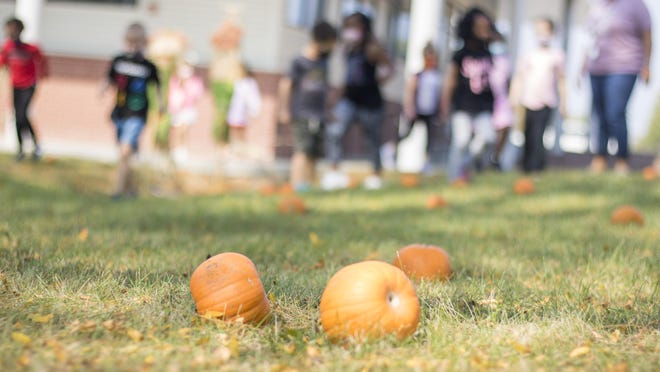 "Students in Da'Maris Meadows' kindergarten class start looking for pumpkins Friday afternoon in a yard outside Jardine Elementary. The school put together a makeshift pumpkin ""patch"" at the school, since the school's kindergarten classes can't make their annual field trip to an actual pumpkin patch this year because of COVID-19."