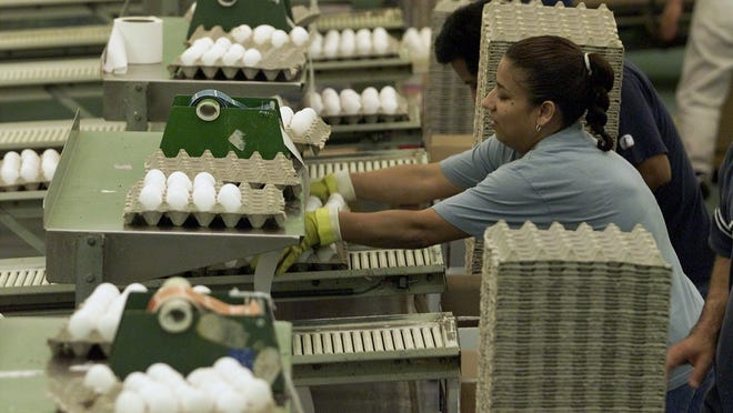 A worker packs eggs at a DeCoster Farms plant near Clarion in this file photograph.