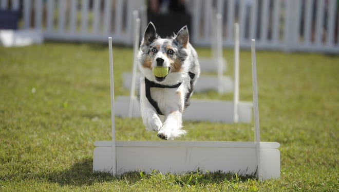 """Thompson's Station's biggest annual event, the """"Dog & Pony Show"""" fall festival will be Sept. 29, 2018."""