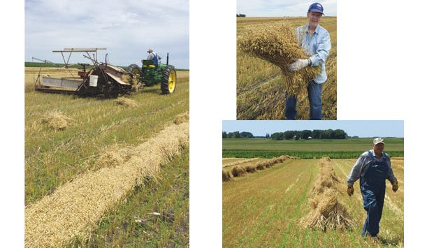 """Binding day: Top left, Mark Rieke driving the binder; right, Cindy Rieke """"hugging"""" bundles and putting them into shocks; below, Mark in the rows of shocks drying in the field."""