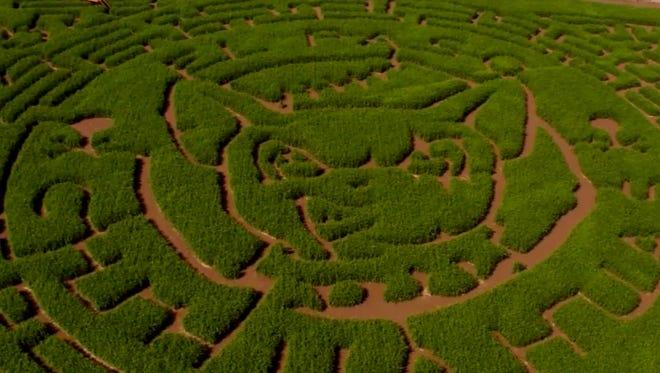 The La Union Corn Maze will open Fridays through Sundays from Saturday through Nov. 5.