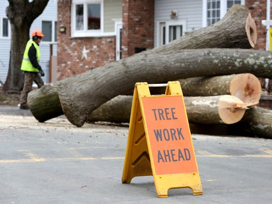 Workers from Ken's Tree Care removed fallen trees with