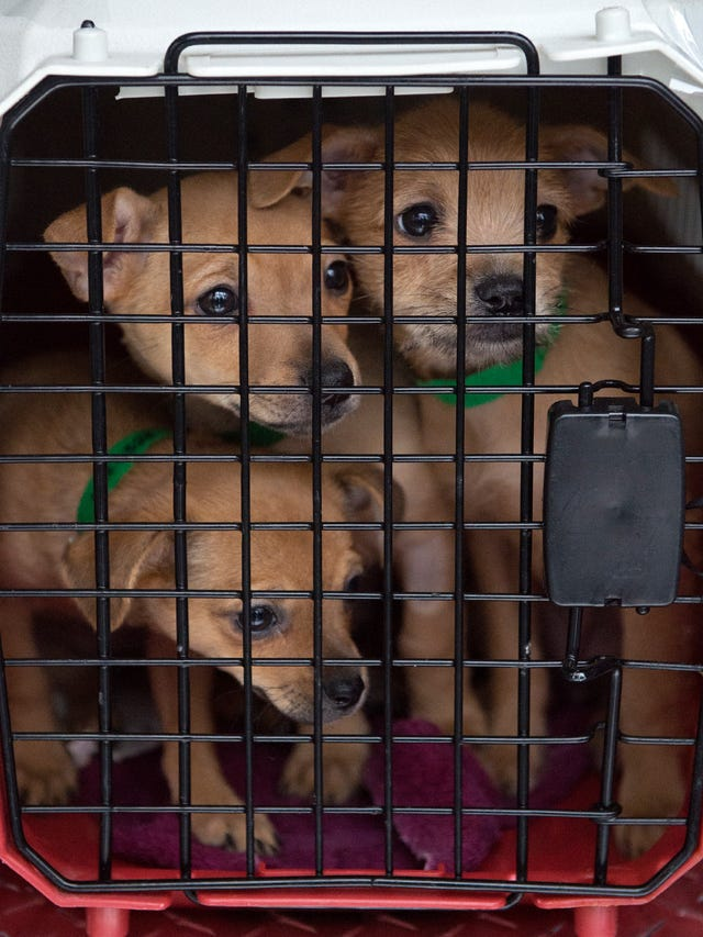 130 dogs fly to New Castle Airport to be adopted