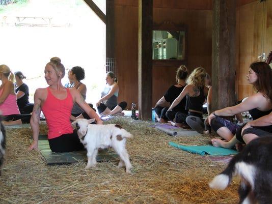 636292447878297826-Goat-yoga-Mauni-Tomlo-Sherry-Syence.jpg