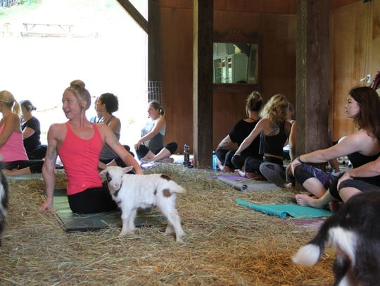 Goat yoga is a thing and happening at Split Creek Farms