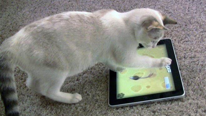 "Maxine plays mouse chasing ""Game for Cats"" on an iPad in Valencia, Calif., in 2011. Claws were found not to hurt screens."