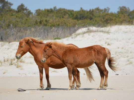 """N9BM-J """"Giggles"""" and her coming-2-year-old colt N9BM-JO,"""