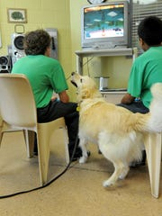 Tin Tin, a golden retriever therapy dog, visits with