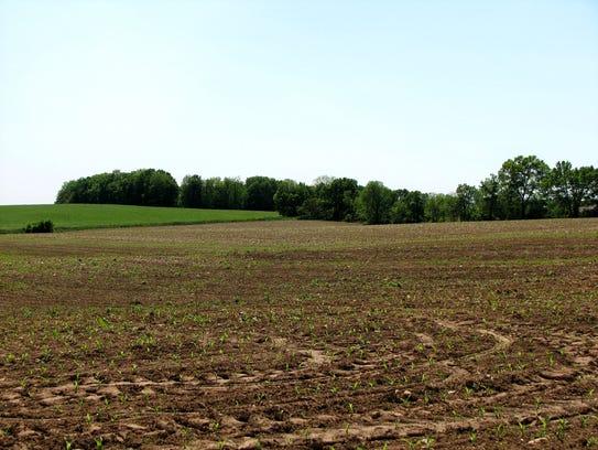 Part of KJ Farm in Harmony Township.