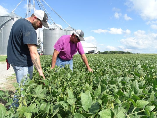 Collin, left, and Greg Schifer look over their soybean