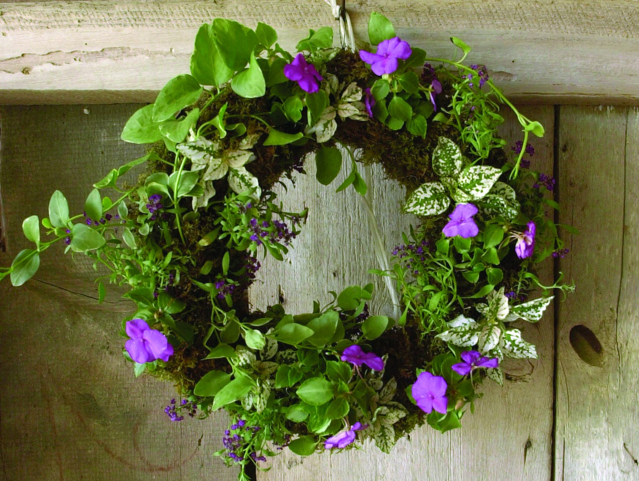 With about $20 and an hour of free time, you can create a live wreath to enjoy all season long!