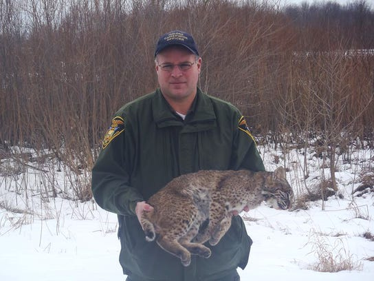 Bobcat hunting and trapping could come to indiana for Indiana hunting and fishing license