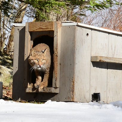 The New Jersey Division of Fish and Wildlife released