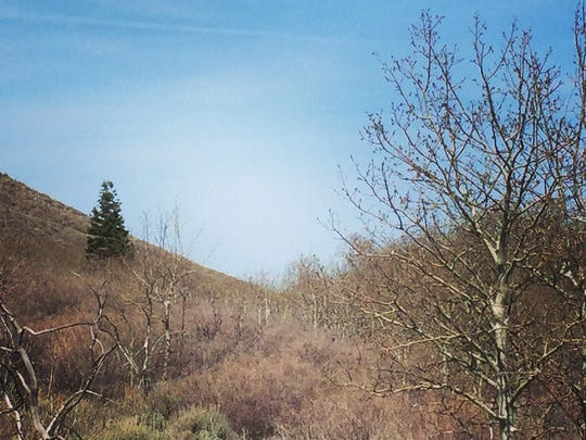 A lone fir tree in a valley on Petersen Mountain shown on April 9, 2015.