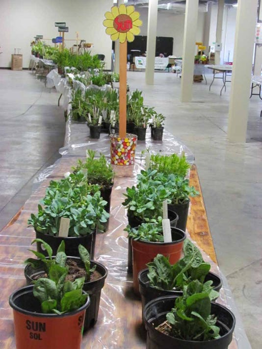 plants_8915.JPG