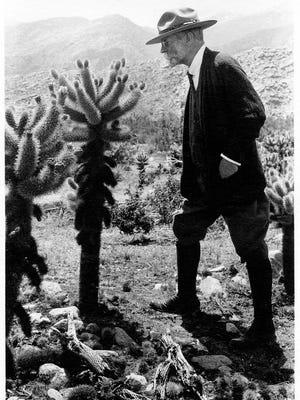 J Smeaton Chase examining cacti.