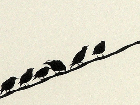birds, telephone wire.jpg