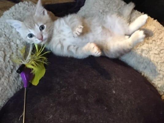 Cat Adoption Event In Millburn