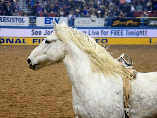 "Award-winning bareback horse ""Virgil"" will be bucking at the National Finals Rodeo next month. The horse was born and raised on the John McNeely ranch near East Glacier."