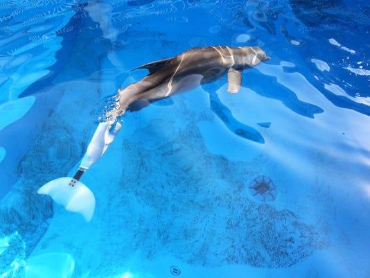 -dolphin with pros.jpg_20150219.jpg