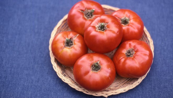 The Celebrity tomato variety continues to be a popular choice nationwide for the homegrown garden. Plants become loaded with 8-ounce red fruits.