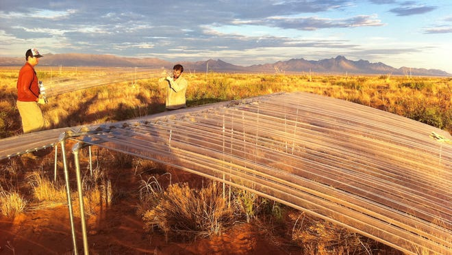 Two men help assemble a rainout shelter used for climate change data for Jornada Basin Long Term Ecological Research