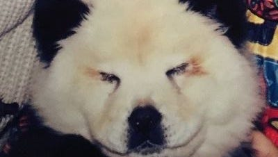 Dogs were painted to look like pandas in Italian circus, authorities say.