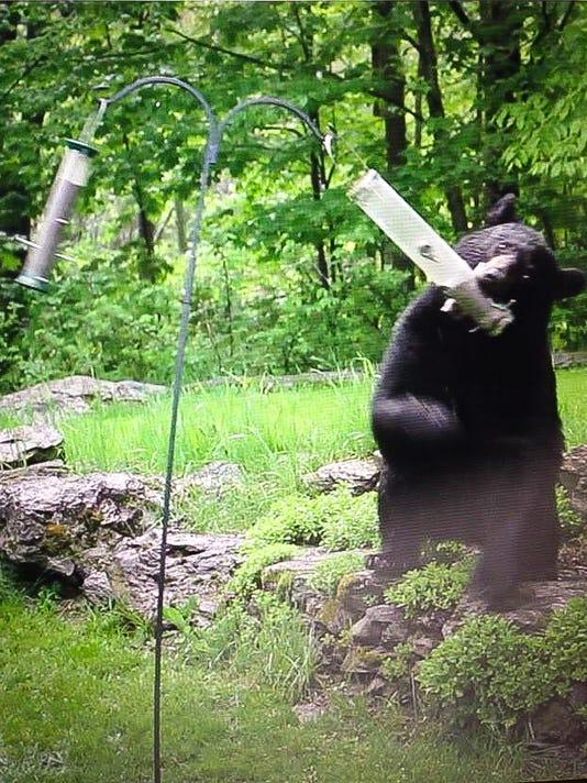 Problem Bear.jpg