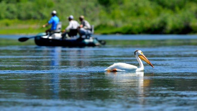 Anglers of kinds share the Missouri River below Craig in July.