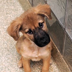 If you're looking for a puppy, now is the time to visit the Washington Animal Rescue League! Multiple litters need new forever homes.