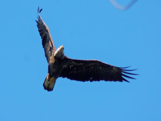A trip to see bald eagles is a must.