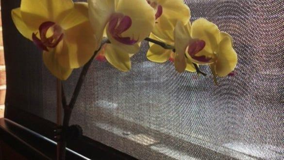 guessflowers