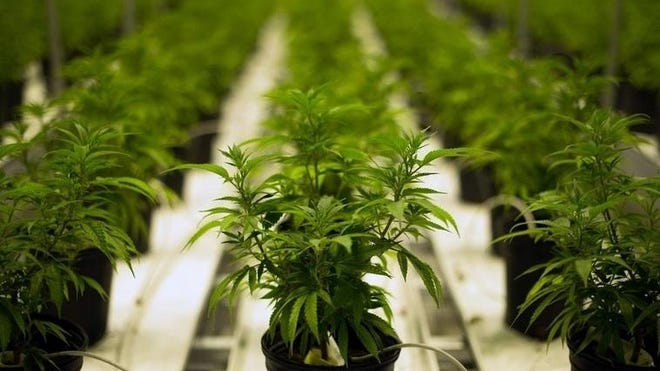 The Massachusetts Cannabis Control Commission is seeking public input, until Oct. 15, on draft regulations for marijuana delivery.