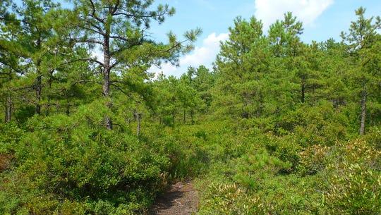 The Franklin Parker Preserve will host a wilderness event for children.