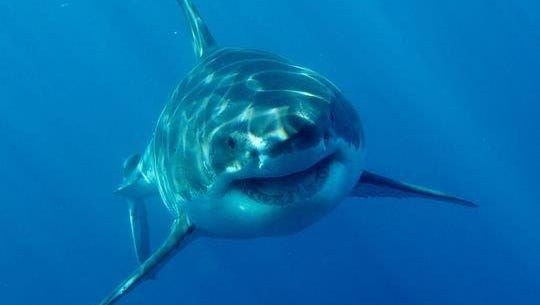 2015 set a record for unprovoked shark attacks.