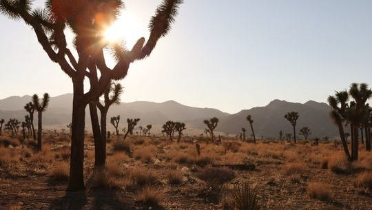 Joshua Tree National Park reports a record Thanksgiving weekend with more than 22,000 visitors from Thursday through Sunday, officials reported.