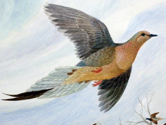 "Detail from the painting, ""Martha, The Last Passenger Pigeon,"" by artist John Ruthven. The painting was made into an ArtWorks project mural and the original hangs in the board room of the Cincinnati Zoo & Botanical Garden. The art project marks the 100-year anniversary of the extinction of the passenger pigeon. Martha, world's last surviving member of her species, died at the Cincinnati Zoo on September 1, 1914."