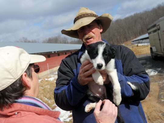 Rob Robertson holds one of the puppies currently at the farm at Big Valley Ranch near Monterey on Wednesday, Feb. 6, 2013.
