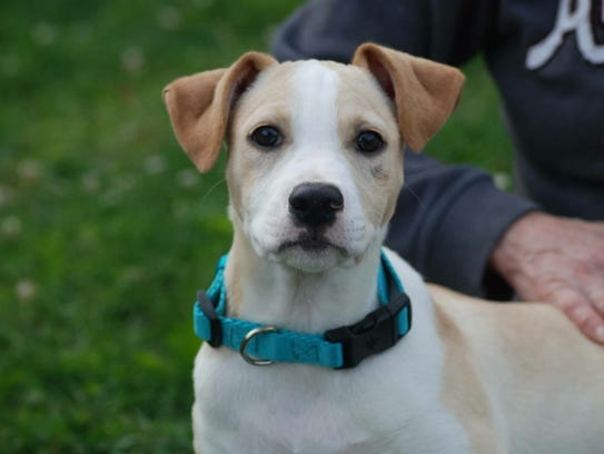 Dean is one of the dogs available through Pibbles &